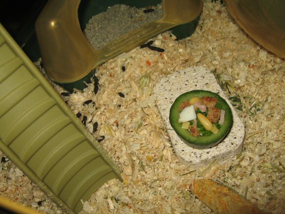Cookin' Ceasar Salad for my hamster Lucy.
