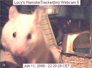 Lucy caught on webcam, by Lee.