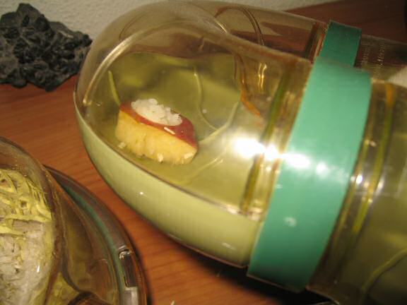 My hamster Lucy and the Apple-sushi I made for her.