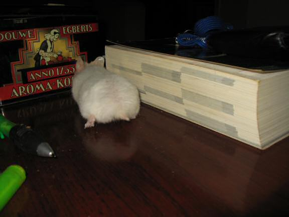 My hamster Lucy exploring all the stuff I put on the coffee-table.