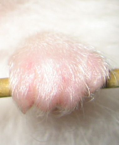 Close up picture of Lucy's left paw.