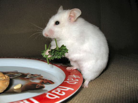 Picture of Lucy enjoying parsley.