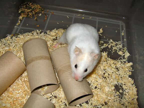 Picture of my hamster Lucy having a look around.