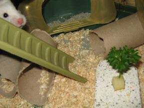 Close up of my hamster Lucy: 'What's up, is this for me?'