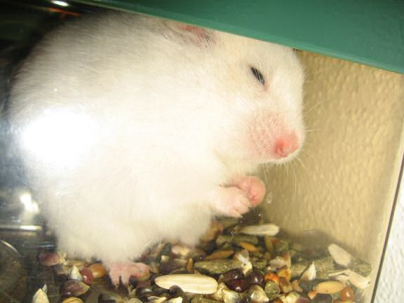 Picture of my hamster Lucy, not really caring about the website change.