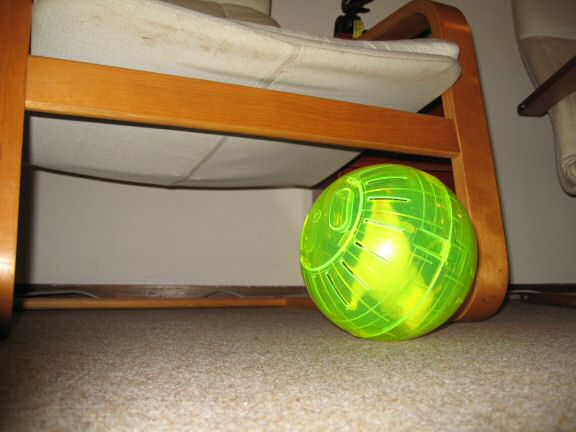 Picture of my hamster Lucy running in her explorer ball.