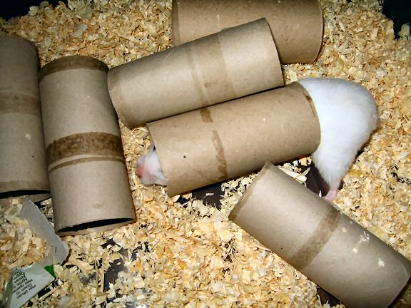 Picture of some bedding removed from my hamster Lucy bedroom, by Lucy.