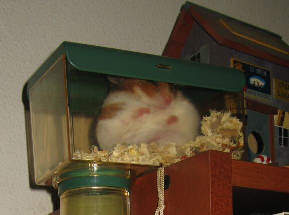 My hamster Lucy sleeping in her 'Meditation-room' for the first time.