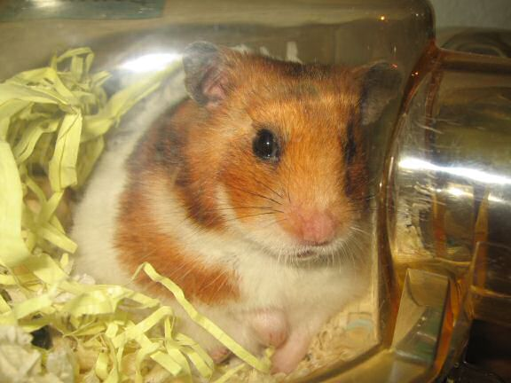 My hamster Lucy wakin' up.