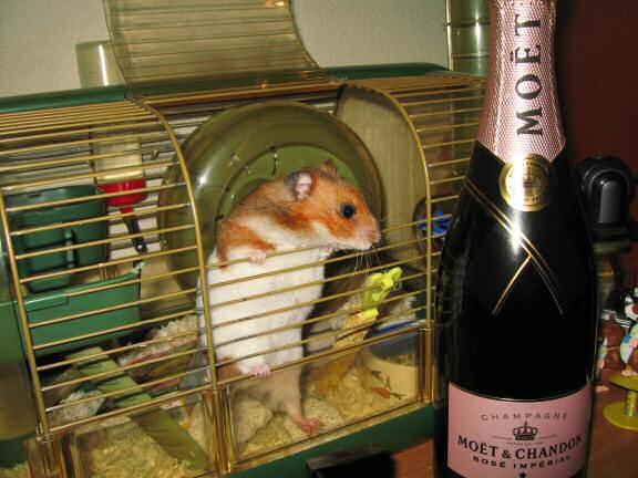 Party preparations with my hamster Lucy.