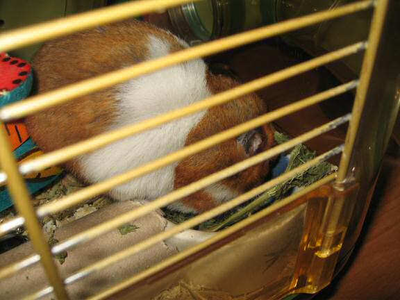 World Animal day 2008, with my hamster Lucy.