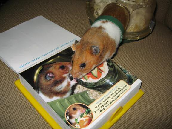 My hamster Lucy is a Pin-Up for a day, on the CuteOverload 2009 - Calendar !