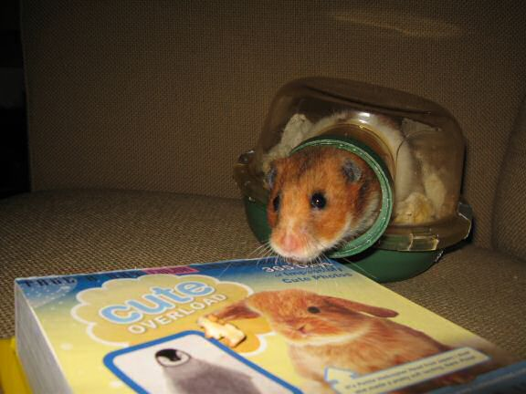 My hamster Lucy is featured on the CuteOverload.com Calendar today !