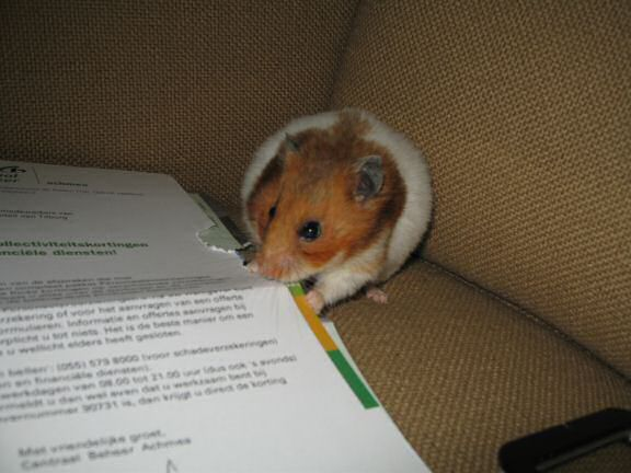 My hamster Lucy's Snail-Mail Help.