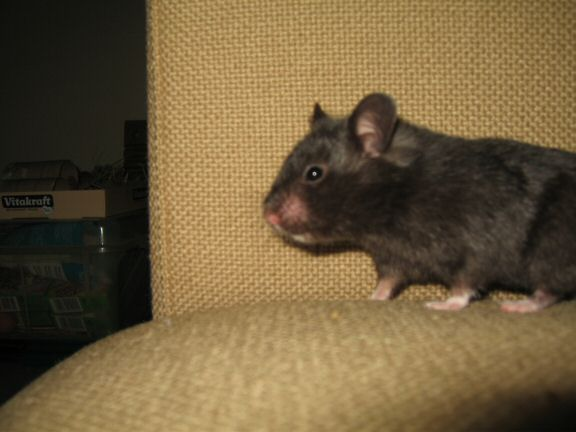 Memorable Couch-Time with my hamster Lucy...