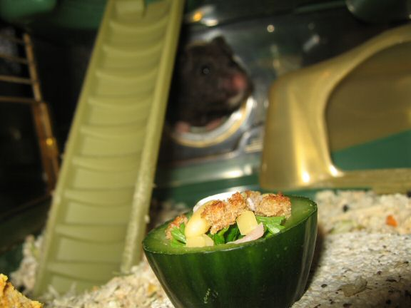 Serving my hamster Lucy the Ceasar Salad dish I made for her.