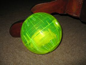 Picture of my hamster Lucy's new Ball.