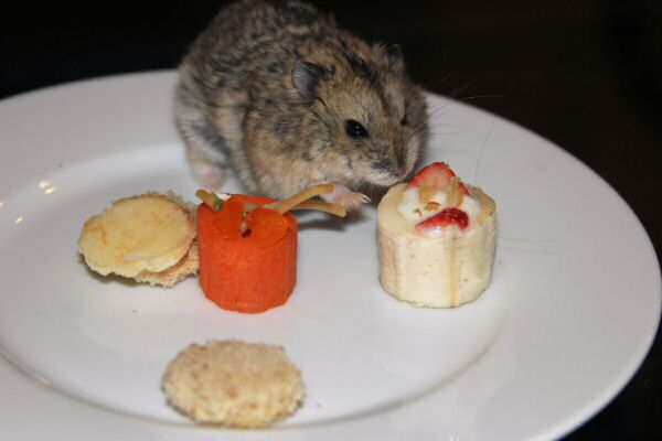 Happy Hamster Cookin' by Beth.