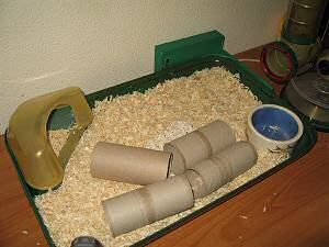 Cleaning my hamster Lucy's cage.