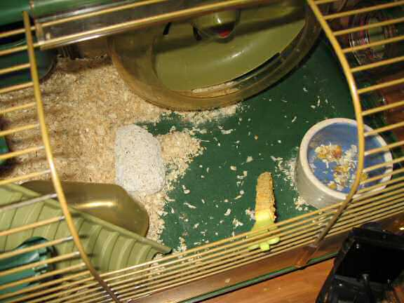 The disaster area my hamster Lucy caused in her cage.