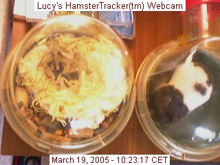 Snapshot of Lucy's webcam.