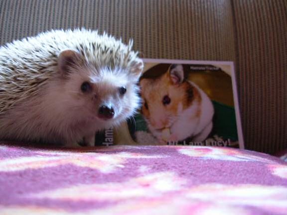 Extreme HamsterTrackin' with Harold the Wonder Hedgehog by Cedar.