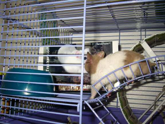 Jose and Yoly's hamsters: Piu and Kiry got hamster babies.