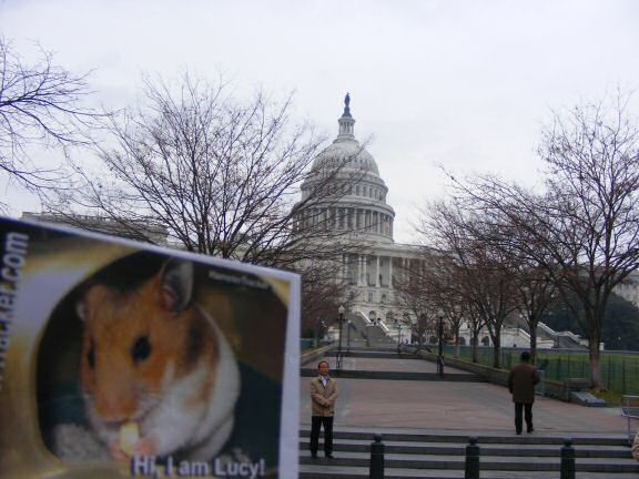 Extreme HamsterTrackin' Washington DC by Katie.
