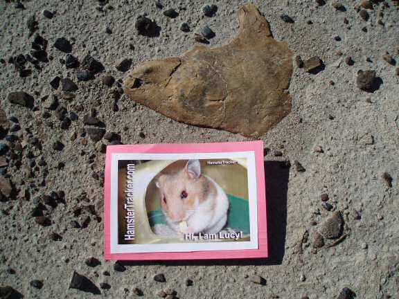 Extreme HamsterTrackin' by LeeAnn at the Dinoaur Provincial Part in Alberta Canada.