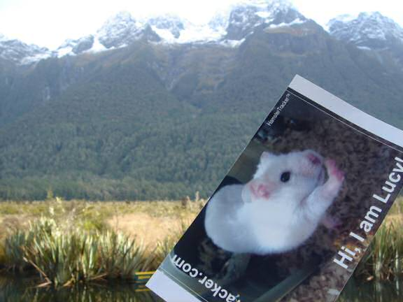 Extreme HamsterTrackin' in New Zealand by Natalie.