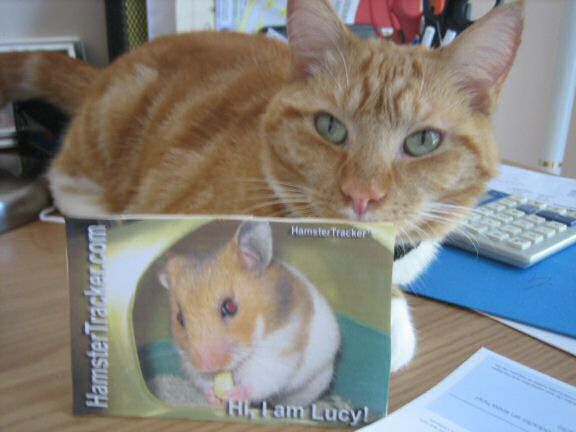 Extreme HamsterTrackin' with Lucy the cat, from Virginia U.S.A.