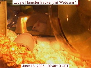 Webcam snapshot of Lucy