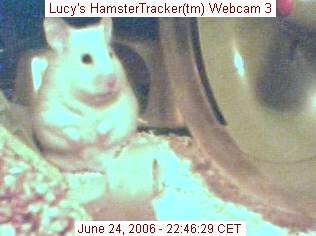 HamsterTracker(tm) Webcam shot of my hamster Lucy!